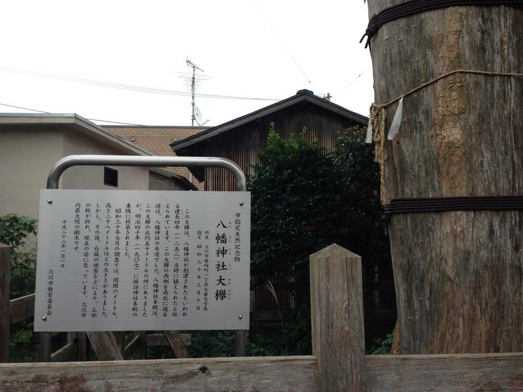 八幡神社跡の大欅八幡神社跡の大欅(おおけやき)